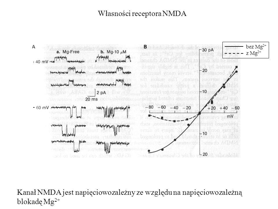 Własności receptora NMDA