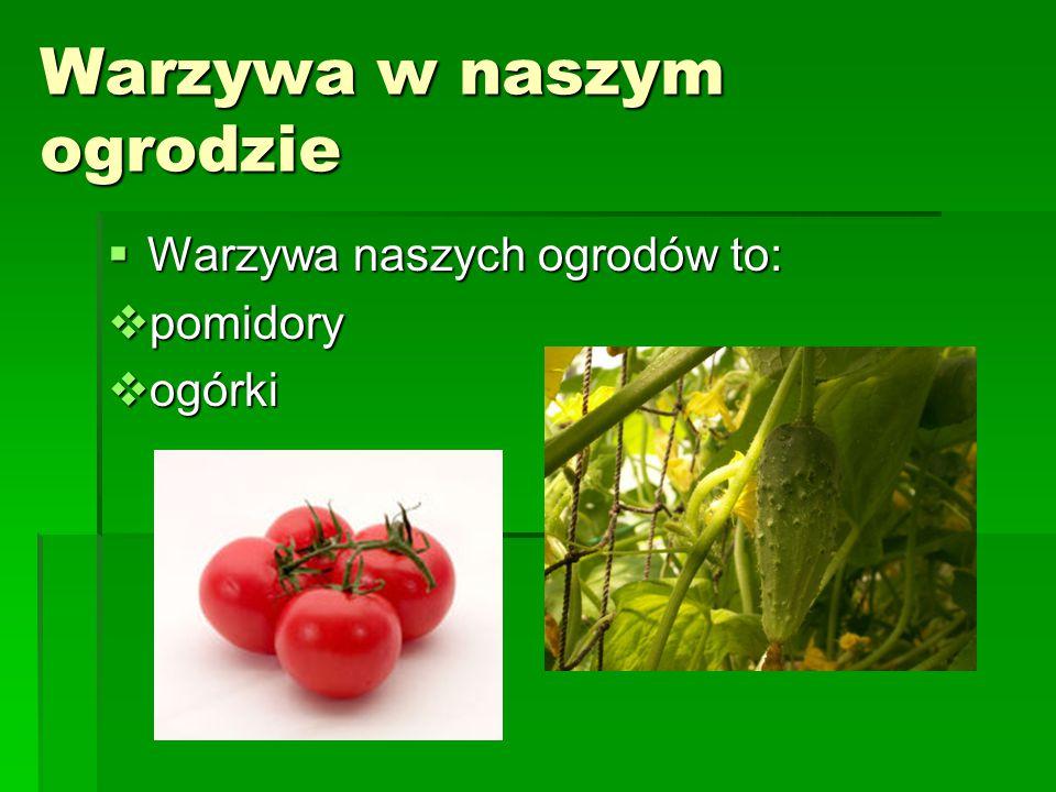 Warzywa w naszym ogrodzie