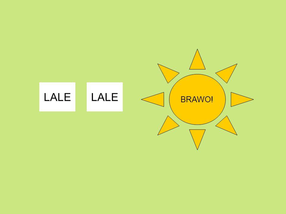 BRAWO! LALE LALE