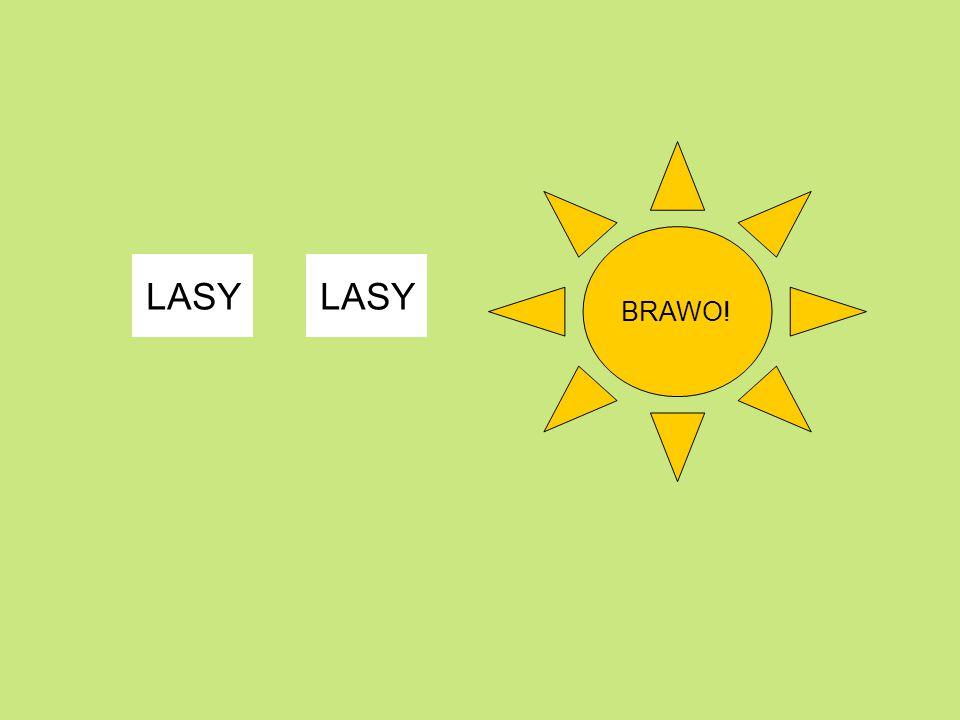 BRAWO! LASY LASY