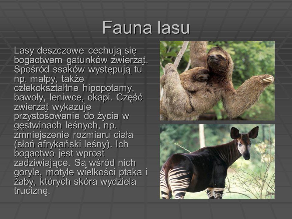 Fauna lasu