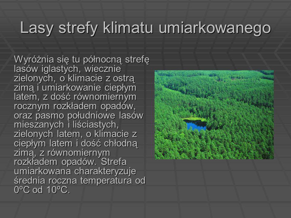 Lasy strefy klimatu umiarkowanego