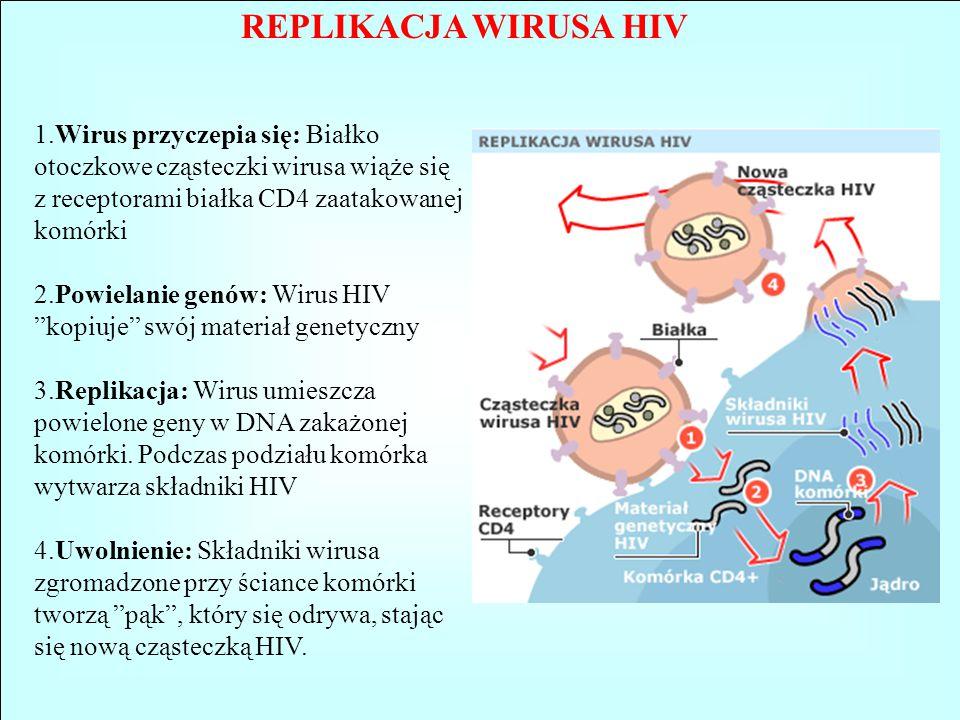 REPLIKACJA WIRUSA HIV 1.Wirus przyczepia się: Białko otoczkowe cząsteczki wirusa wiąże się z receptorami białka CD4 zaatakowanej komórki.