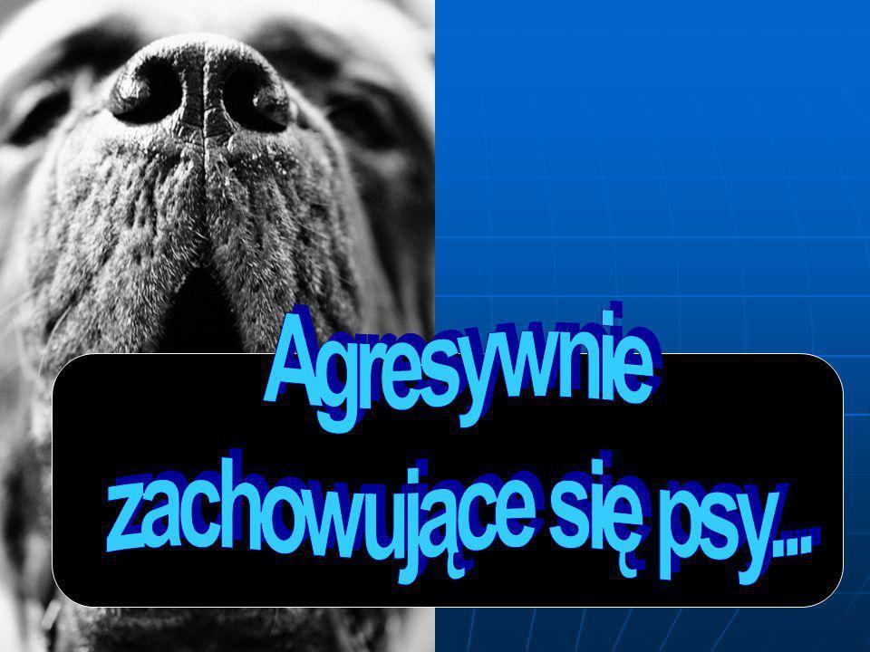 Agresywnie zachowujące się psy...