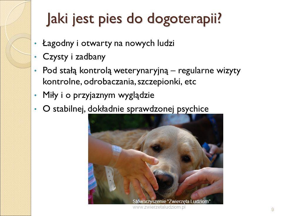 Jaki jest pies do dogoterapii
