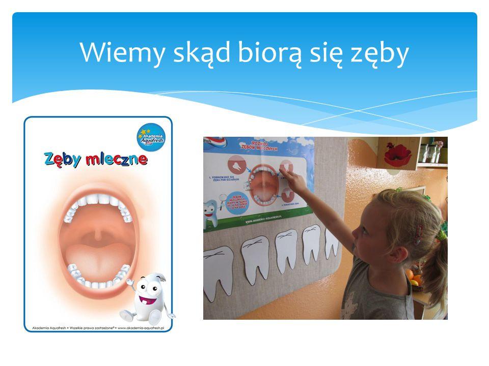 Wiemy skąd biorą się zęby