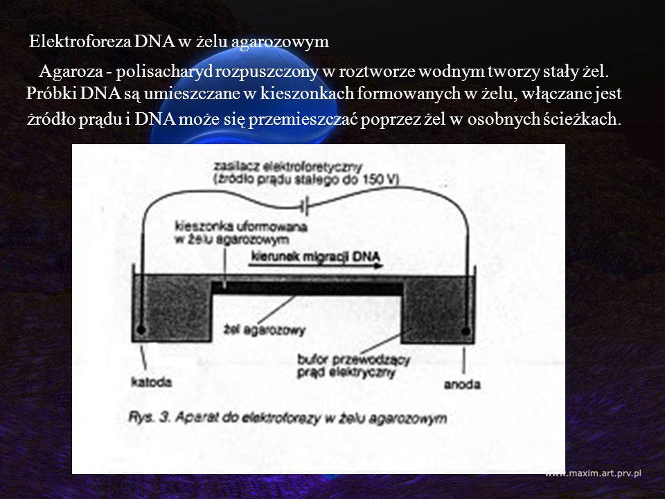 Elektroforeza DNA w żelu agarozowym