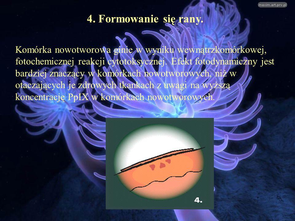 4. Formowanie się rany.