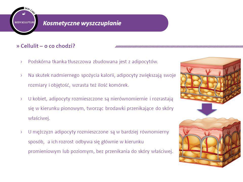» Cellulit – o co chodzi Podskórna tkanka tłuszczowa zbudowana jest z adipocytów.