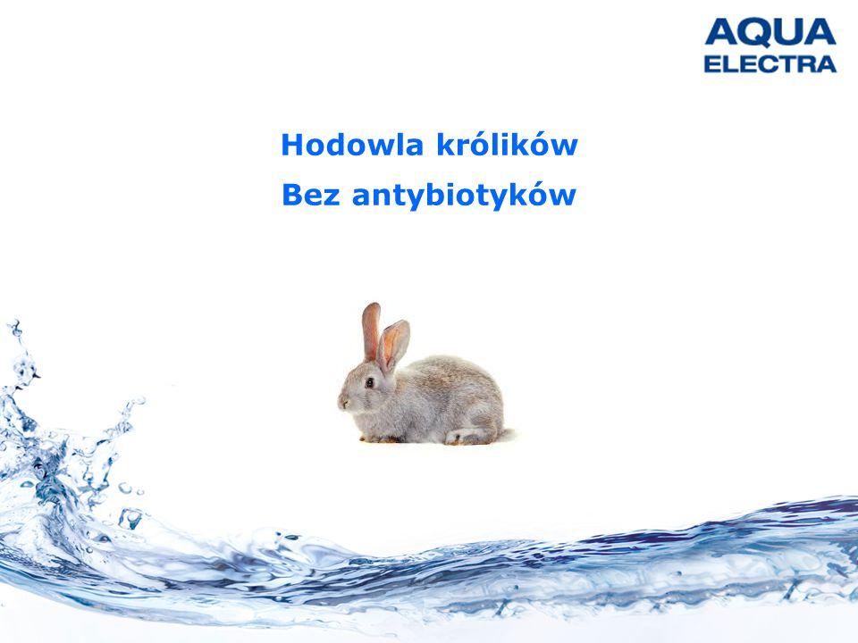 Hodowla królików Bez antybiotyków