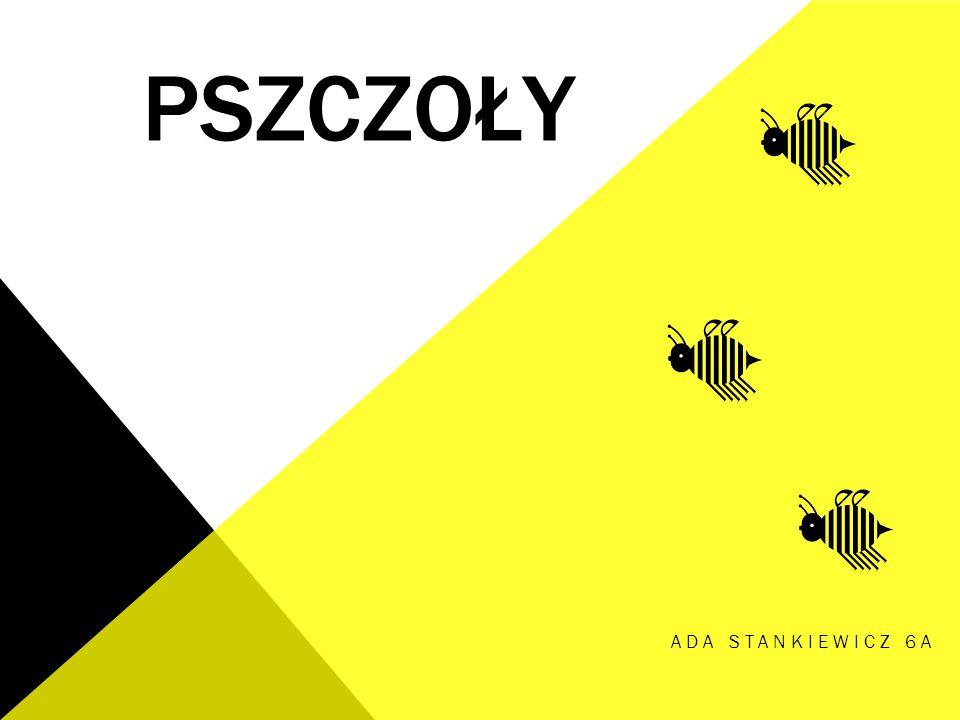 Pszczoły Ada Stankiewicz 6a