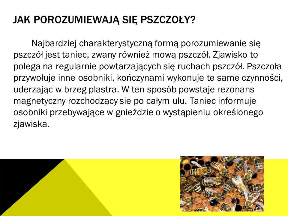 Jak porozumiewają się pszczoły