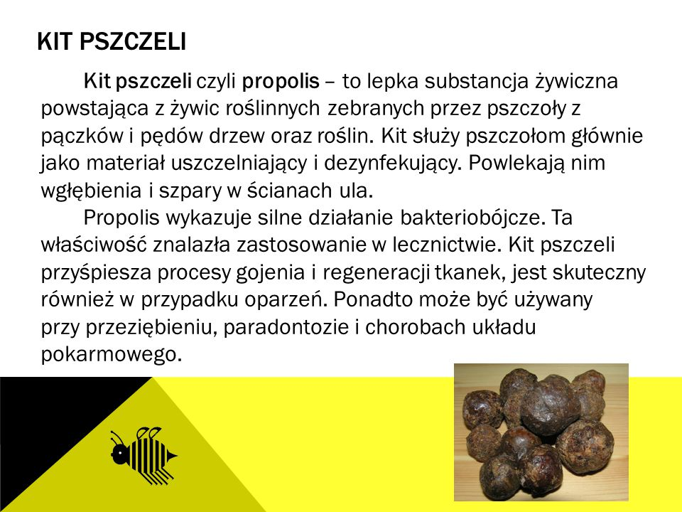 Kit Pszczeli