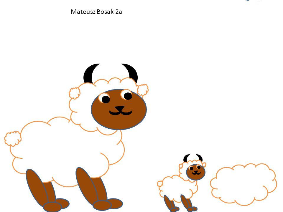 Mateusz Bosak 2a