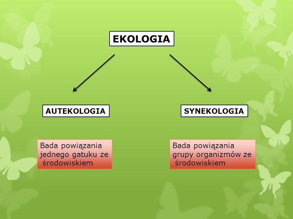 EKOLOGIA AUTEKOLOGIA SYNEKOLOGIA Bada powiązania jednego gatuku ze