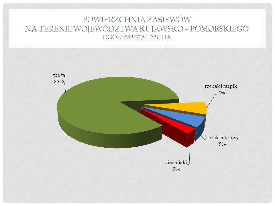 Powierzchnia zasiewów na terenie województwa kujawsko – pomorskiego ogółem 857,8 tys. ha