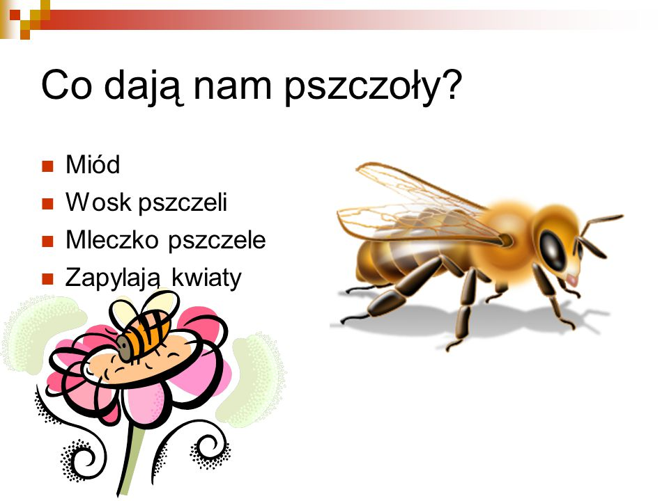 Co dają nam pszczoły Miód Wosk pszczeli Mleczko pszczele