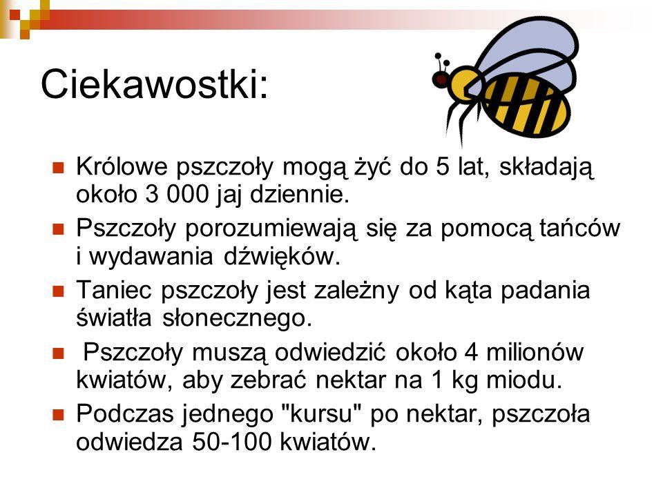 Ciekawostki: Królowe pszczoły mogą żyć do 5 lat, składają około 3 000 jaj dziennie.