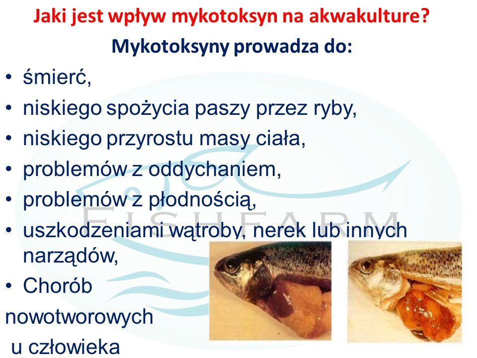 Jaki jest wpływ mykotoksyn na akwakulture Mykotoksyny prowadza do: