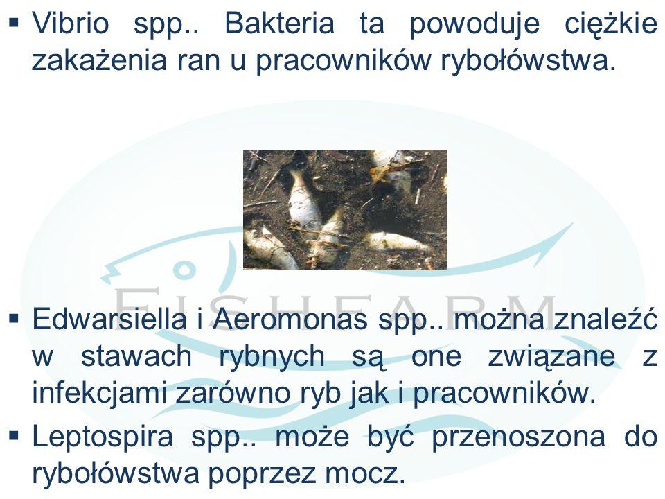 Vibrio spp.. Bakteria ta powoduje ciężkie zakażenia ran u pracowników rybołówstwa.