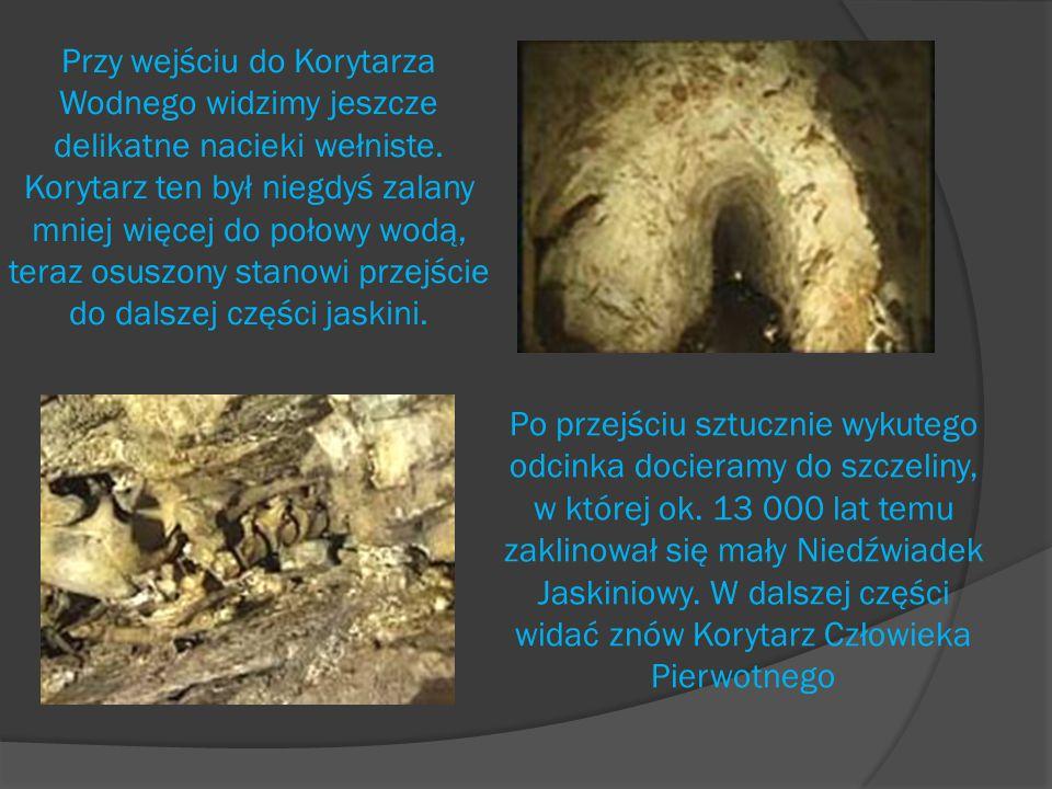 Przy wejściu do Korytarza Wodnego widzimy jeszcze delikatne nacieki wełniste. Korytarz ten był niegdyś zalany mniej więcej do połowy wodą, teraz osuszony stanowi przejście do dalszej części jaskini.
