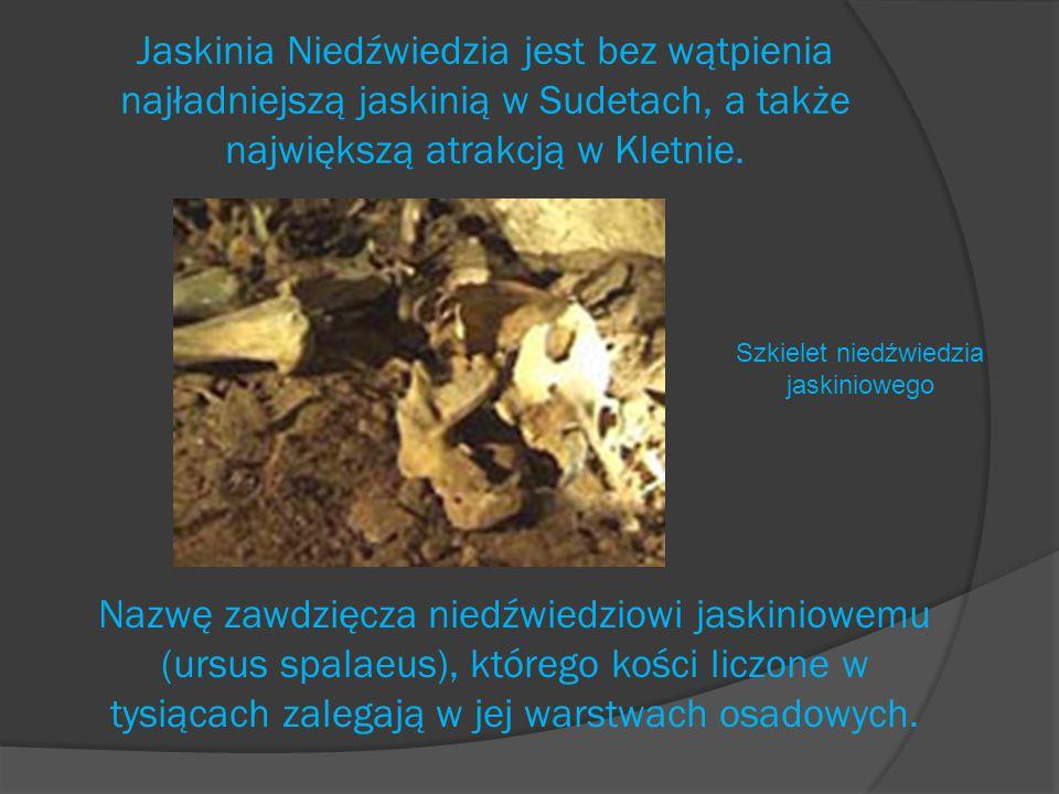 Szkielet niedźwiedzia jaskiniowego