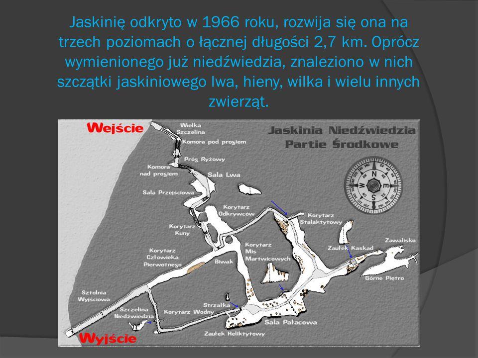 Jaskinię odkryto w 1966 roku, rozwija się ona na trzech poziomach o łącznej długości 2,7 km.