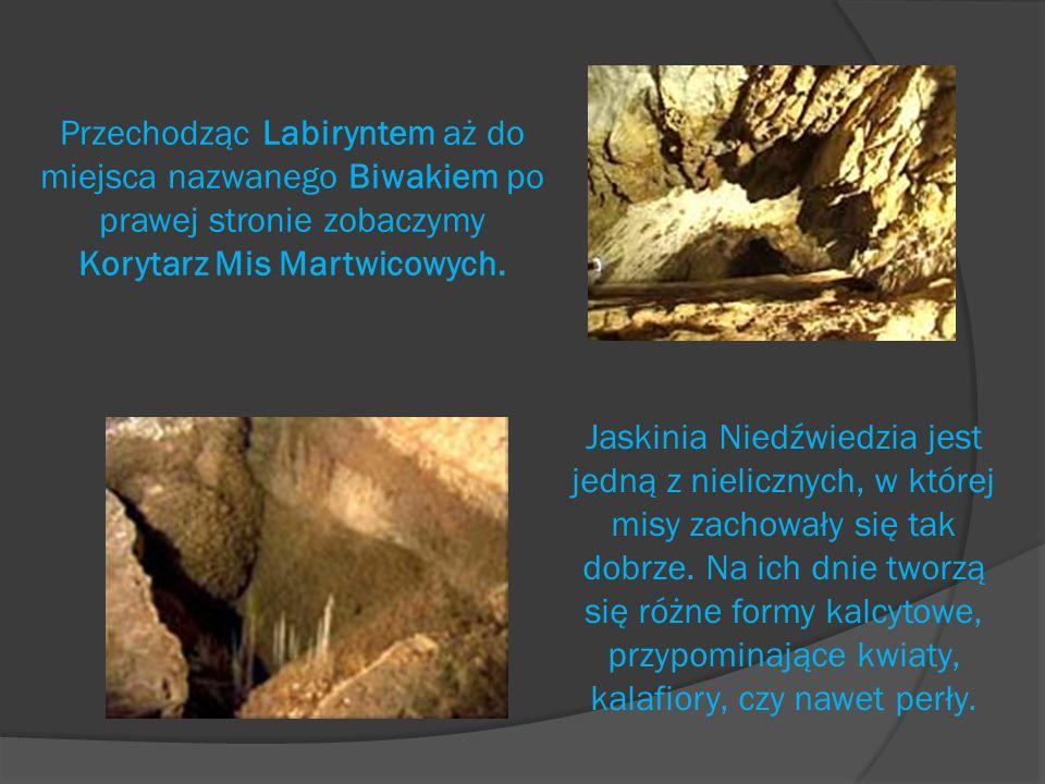 Przechodząc Labiryntem aż do miejsca nazwanego Biwakiem po prawej stronie zobaczymy Korytarz Mis Martwicowych.