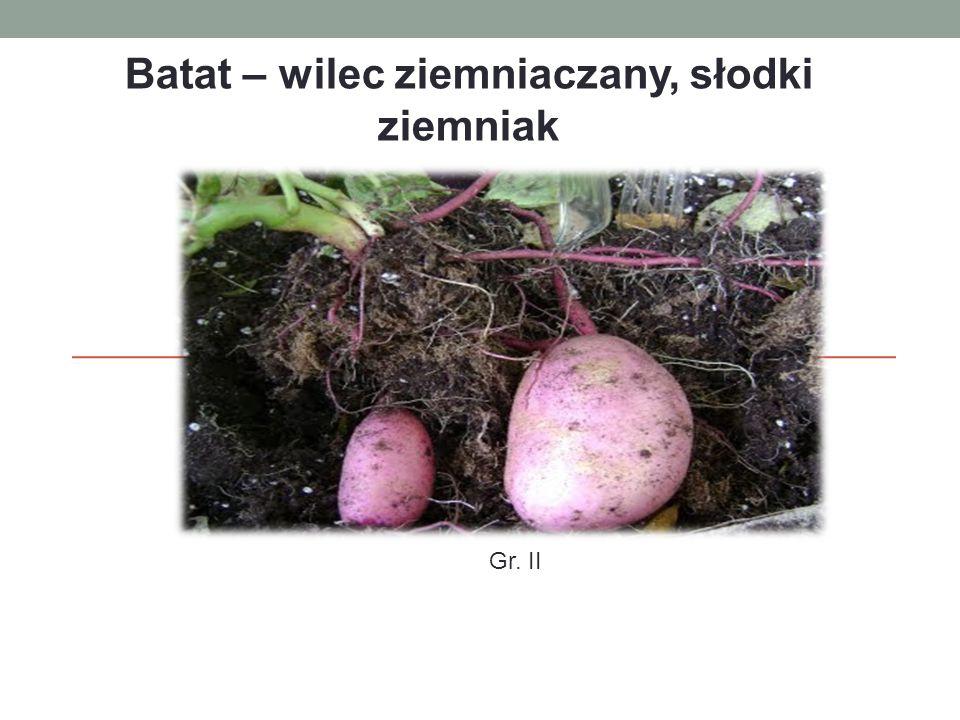 Batat – wilec ziemniaczany, słodki ziemniak