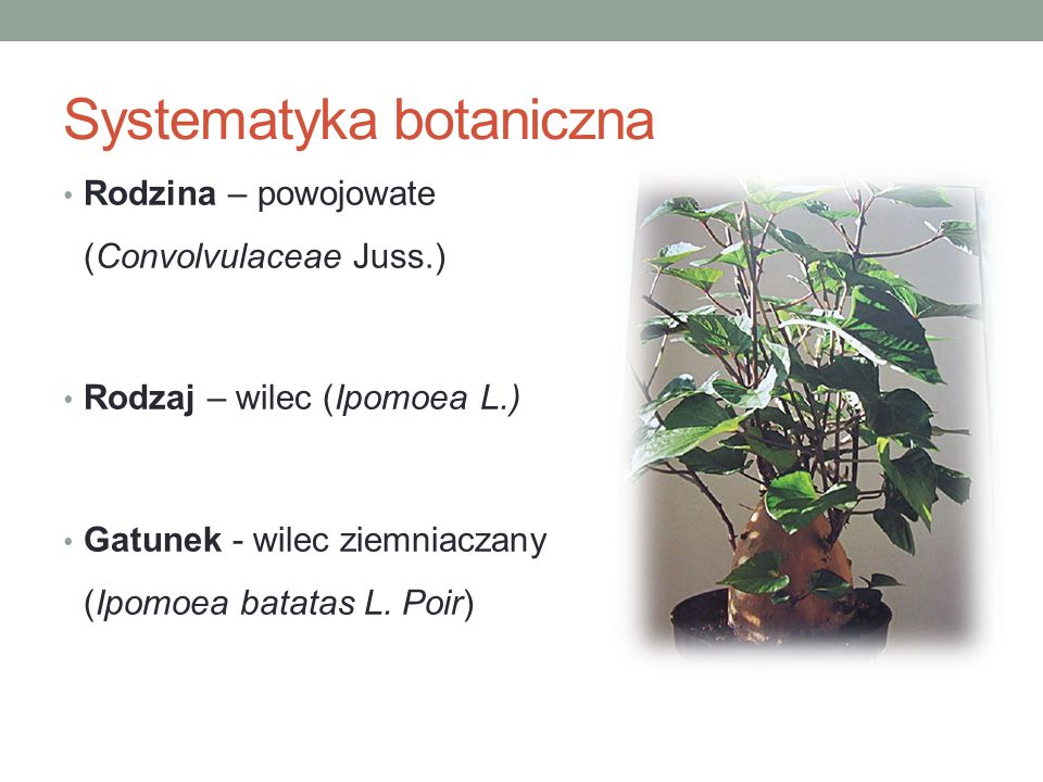 Systematyka botaniczna