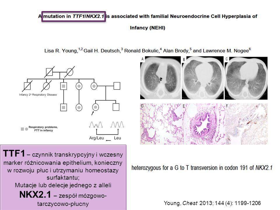 TTF1 – czynnik transkrypcyjny i wczesny marker różnicowania epithelium, konieczny w rozwoju płuc i utrzymaniu homeostazy surfaktantu;
