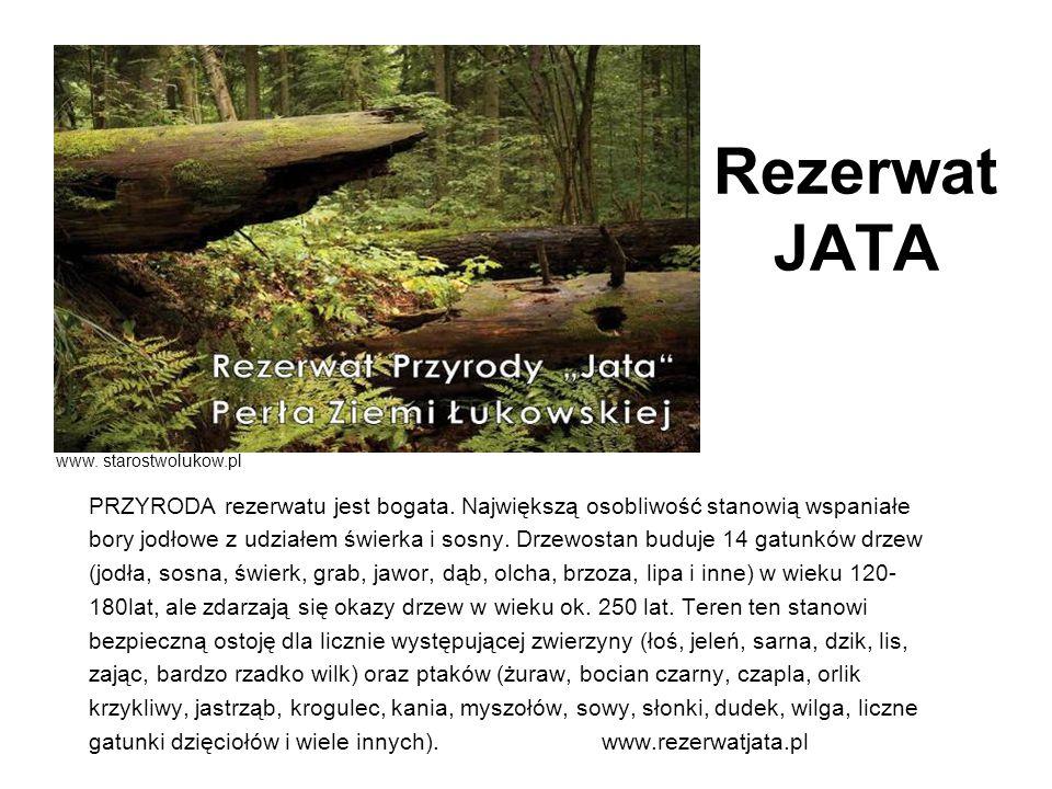 Rezerwat JATA www. starostwolukow.pl. PRZYRODA rezerwatu jest bogata. Największą osobliwość stanowią wspaniałe.