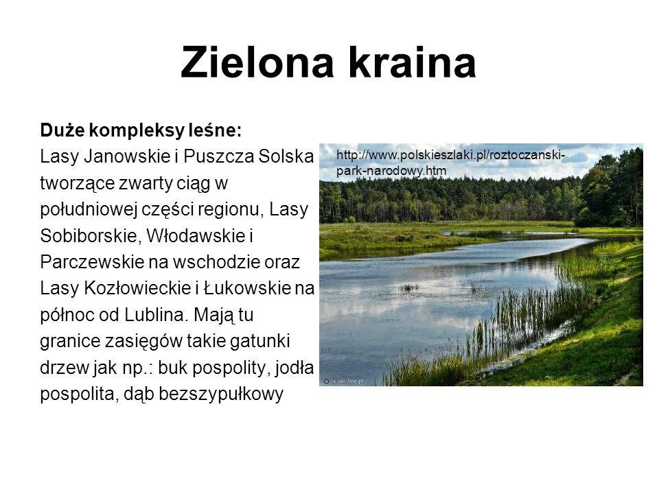 Zielona kraina Duże kompleksy leśne: Lasy Janowskie i Puszcza Solska
