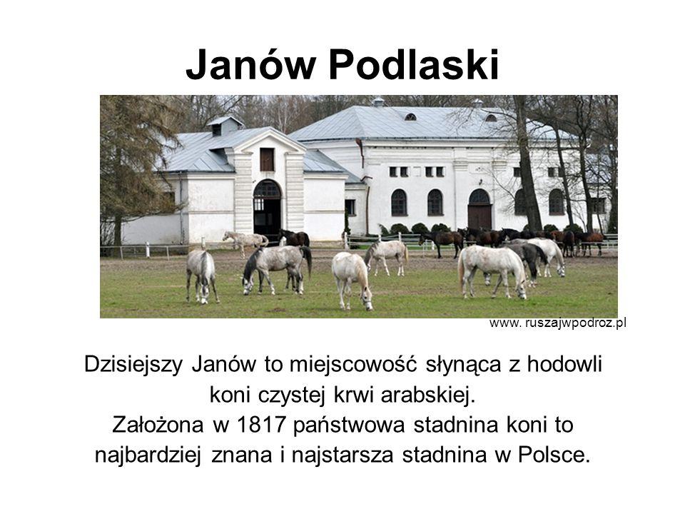 Janów Podlaski Dzisiejszy Janów to miejscowość słynąca z hodowli