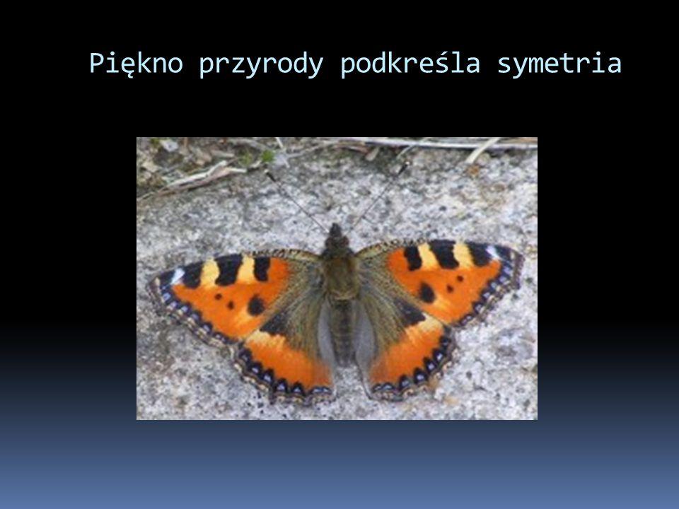 Piękno przyrody podkreśla symetria