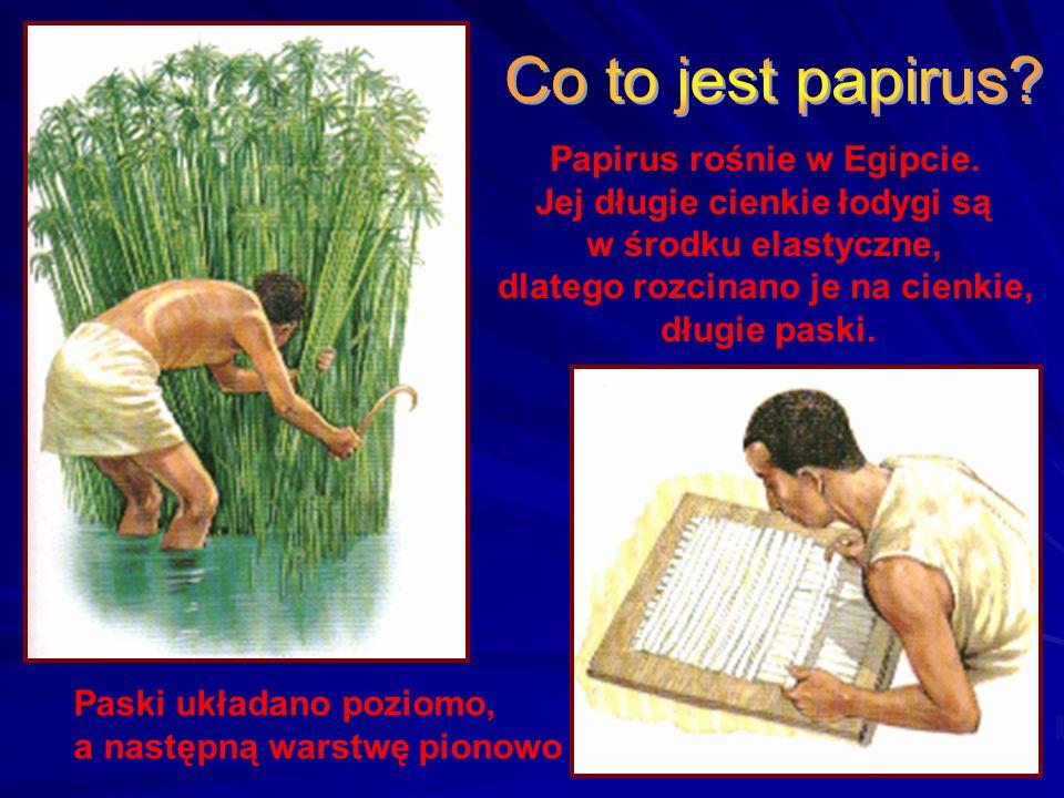 Co to jest papirus Papirus rośnie w Egipcie.