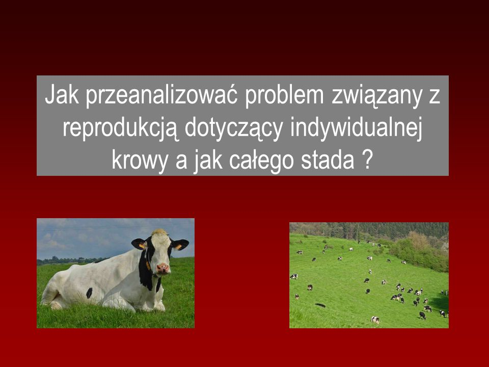 Jak przeanalizować problem związany z reprodukcją dotyczący indywidualnej krowy a jak całego stada