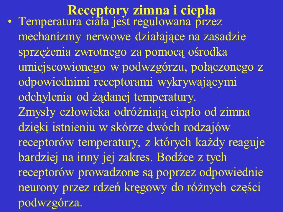Receptory zimna i ciepła