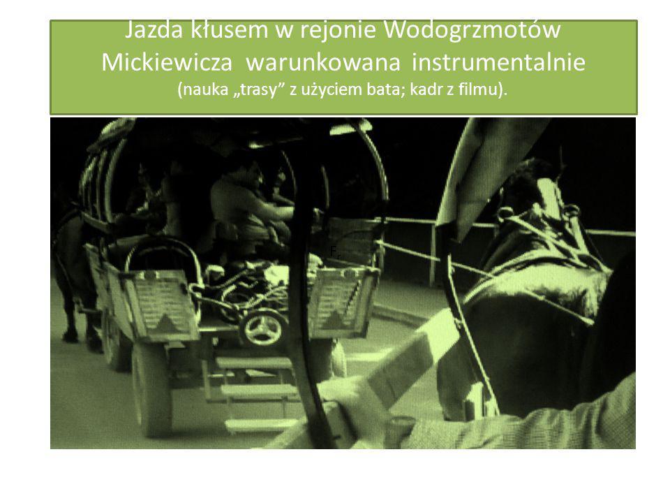 """Jazda kłusem w rejonie Wodogrzmotów Mickiewicza warunkowana instrumentalnie (nauka """"trasy z użyciem bata; kadr z filmu)."""
