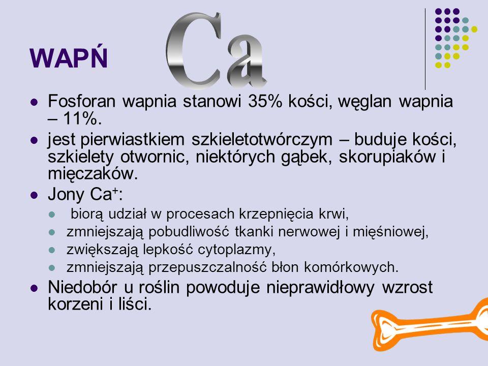 WAPŃ Ca Fosforan wapnia stanowi 35% kości, węglan wapnia – 11%.