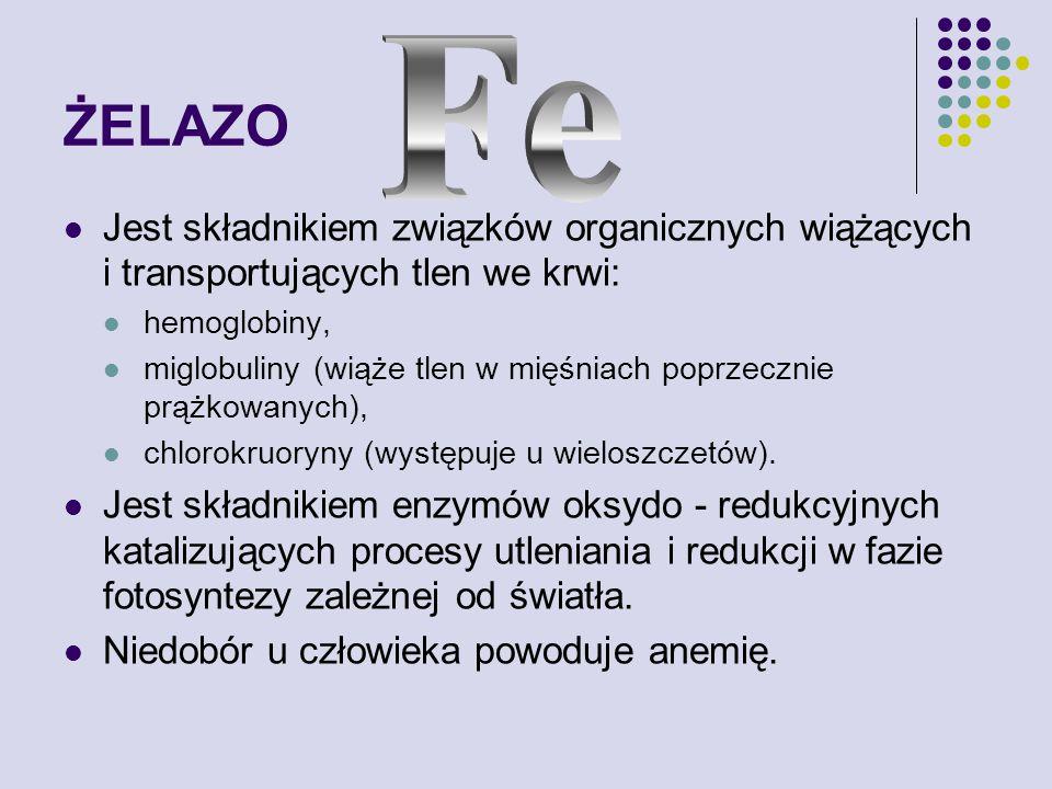 ŻELAZO Fe. Jest składnikiem związków organicznych wiążących i transportujących tlen we krwi: hemoglobiny,