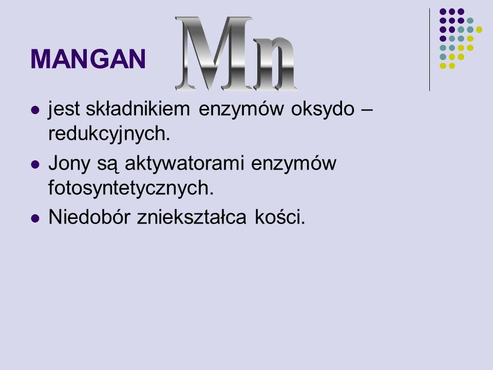 MANGAN Mn jest składnikiem enzymów oksydo – redukcyjnych.