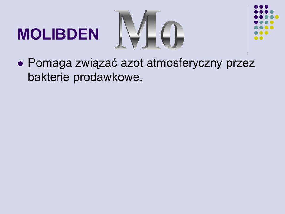 MOLIBDEN Mo Pomaga związać azot atmosferyczny przez bakterie prodawkowe.