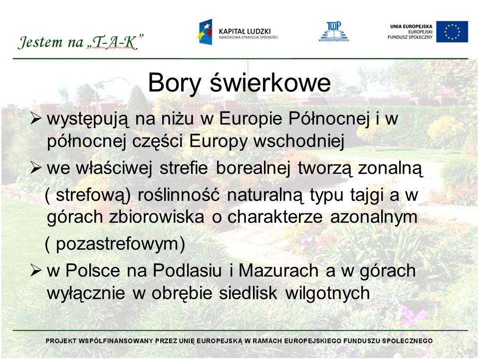 Bory świerkowe występują na niżu w Europie Północnej i w północnej części Europy wschodniej. we właściwej strefie borealnej tworzą zonalną.