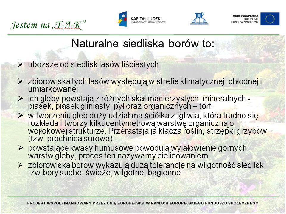 Naturalne siedliska borów to: