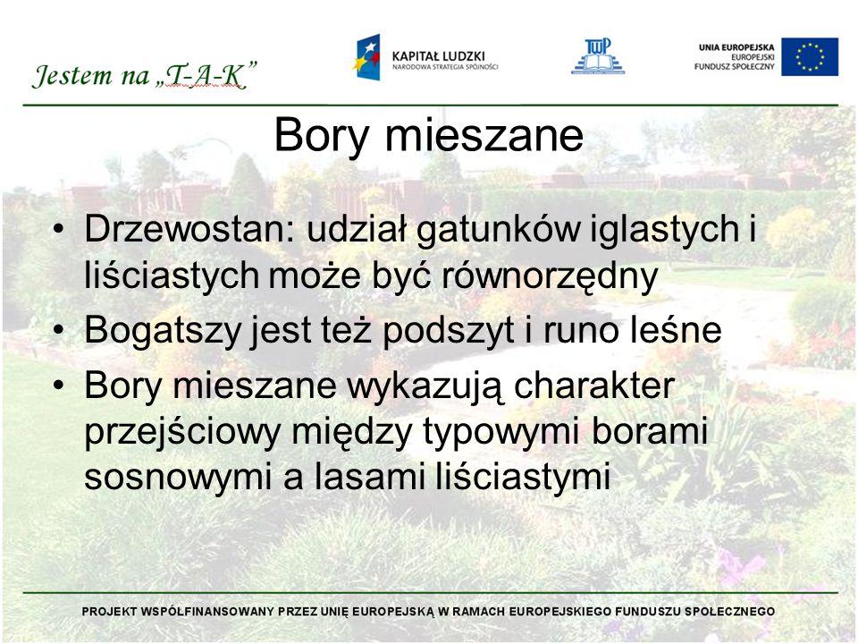 Bory mieszane Drzewostan: udział gatunków iglastych i liściastych może być równorzędny. Bogatszy jest też podszyt i runo leśne.