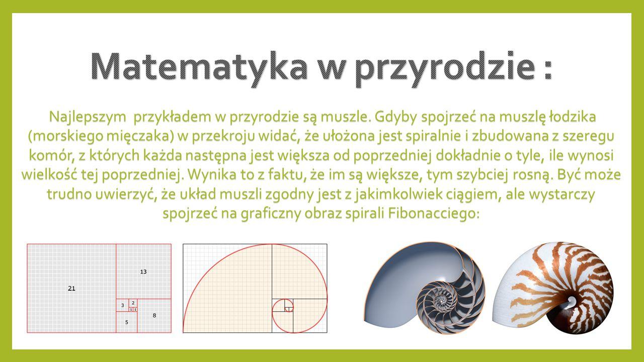 Matematyka w przyrodzie :