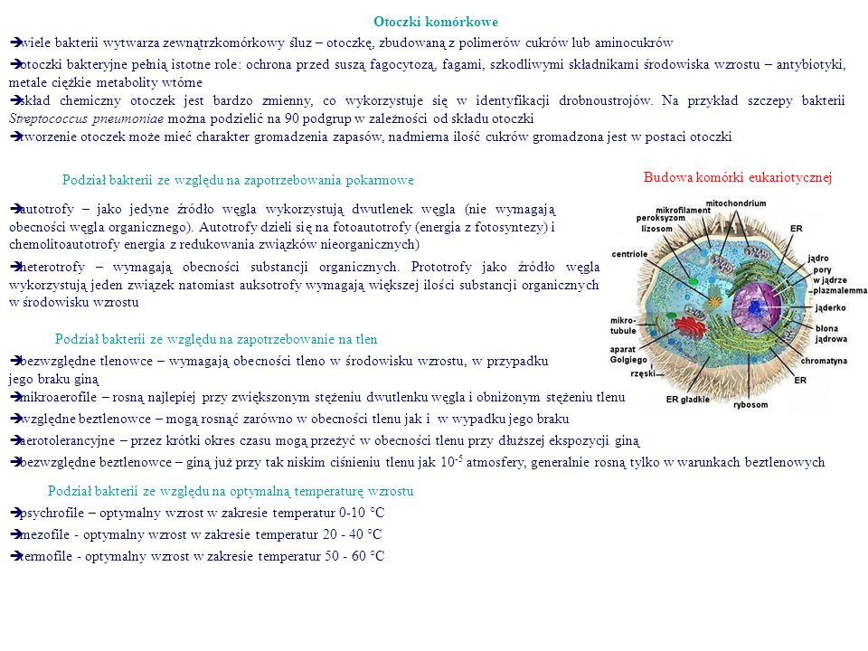 Budowa komórki eukariotycznej
