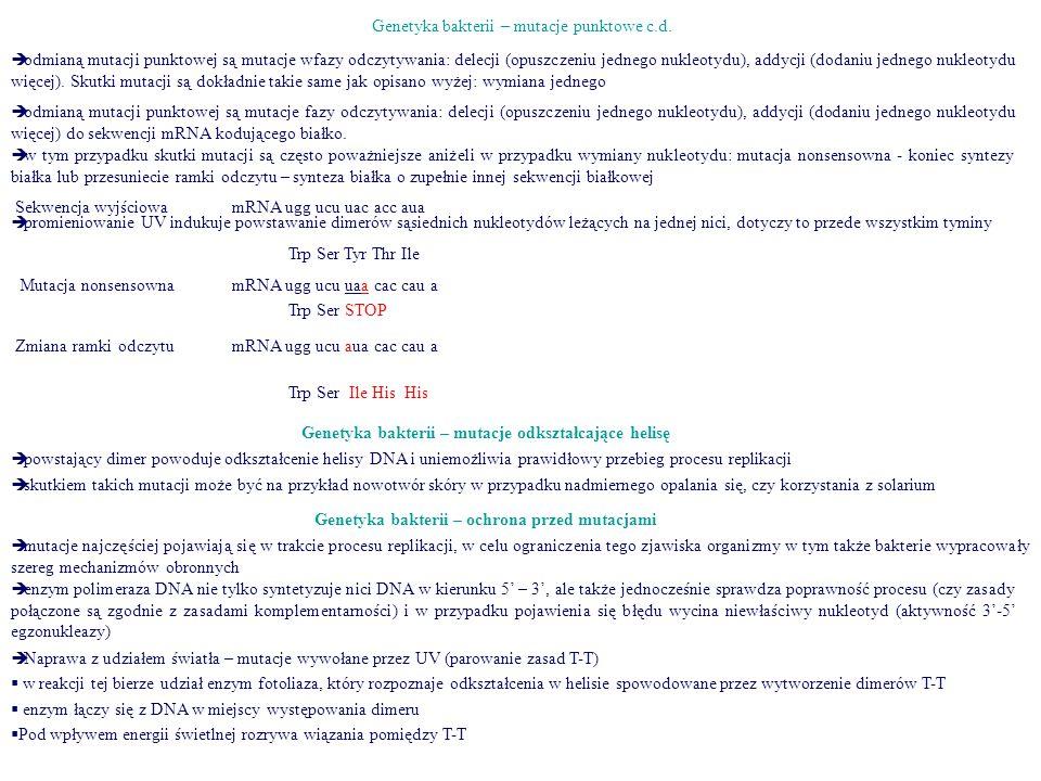 Mutacja nonsensowna Genetyka bakterii – mutacje punktowe c.d.