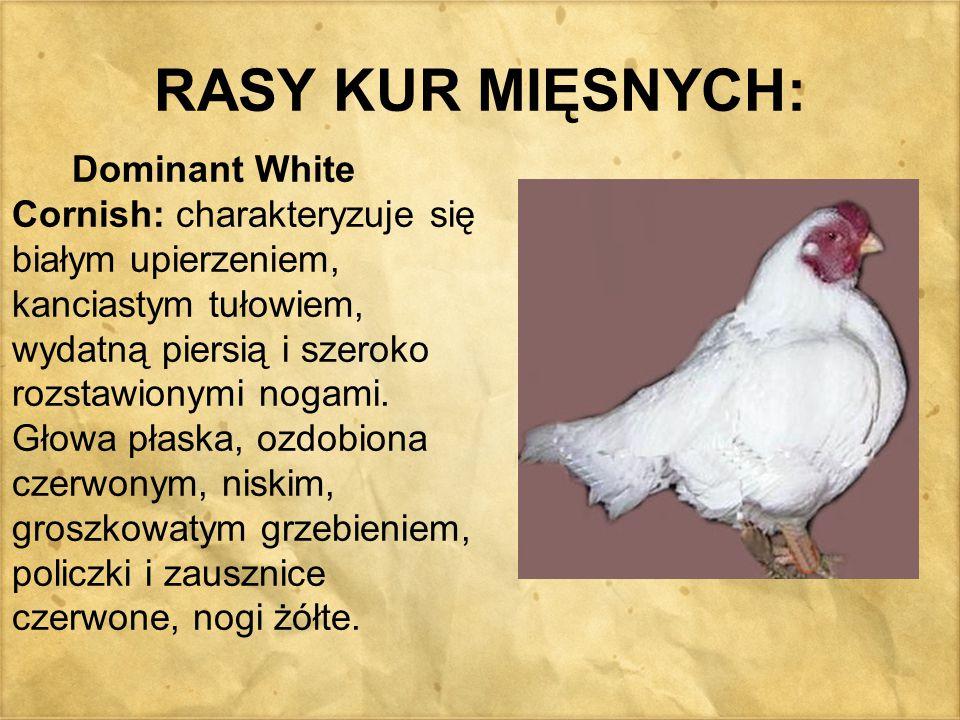 RASY KUR MIĘSNYCH: